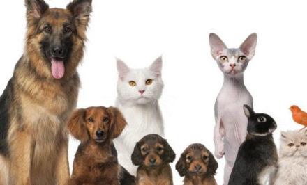 Assurance médicale maladie d'animal de compagnie